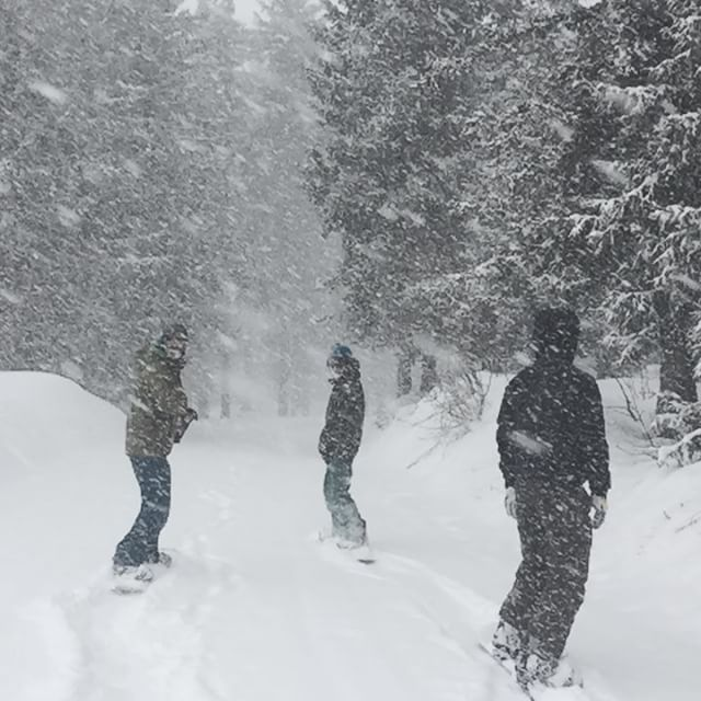 If you go down to the woods today you're in for nice surprise. #meribel #courchevel #snowing #like #a #mofo #les3vallees #aveczest #skischool #marmalade #welovewinter - 2016-02-08 20:41:04